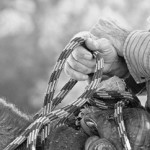 "Photograph, Black & White: ""Cattleman & Horse Trainer Hands"" by Kay Speaks"